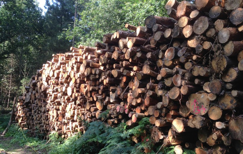 Sustainable local timber sources
